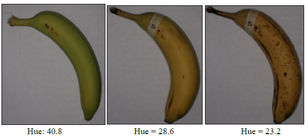 Figure 7: Hue change in a banana over its life-time.