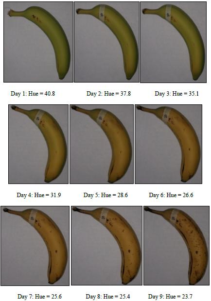 Figure 16: Example hue change over life-time of banana 20.